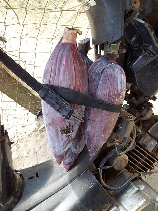 Vietnam - banana flowers strapped to motorbike (small)